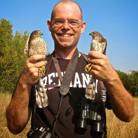 Chad Heins with a pair of Sharp-shinned Hawks