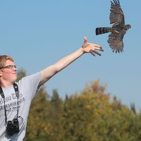Abe Faugstad releasing a Sharp-shinned Hawk
