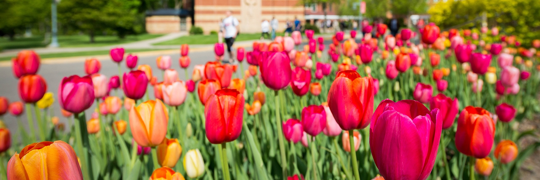 Tulips in a flower bed by Trinity Chapel
