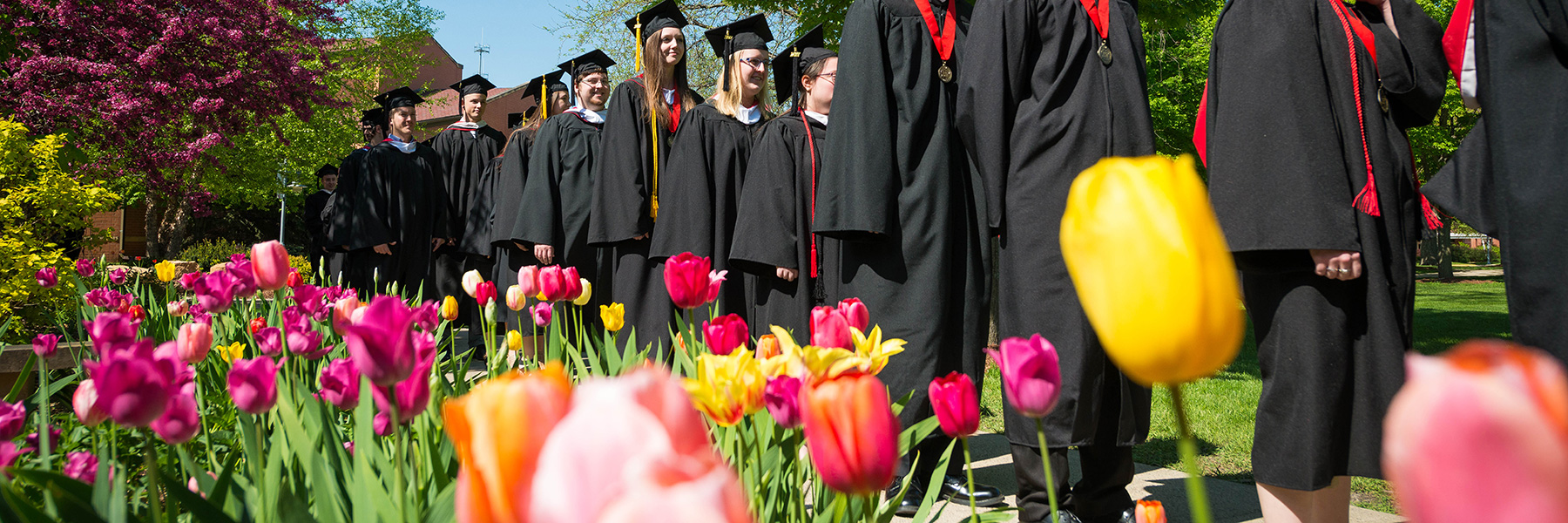 graduates walk by a bed of tulips on the campus